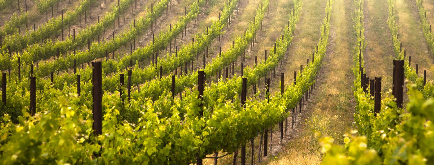 DWM - Sunny Vineyards UIOE