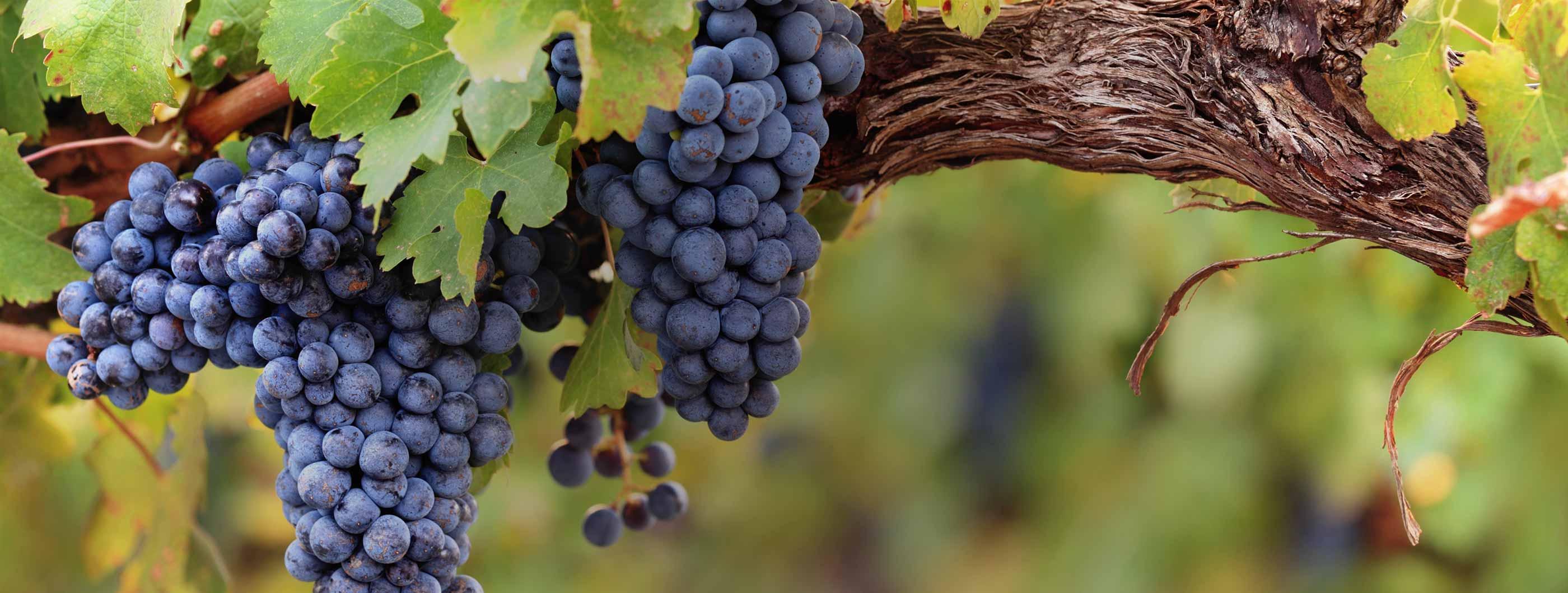 DWM - Quality Management Vineyards